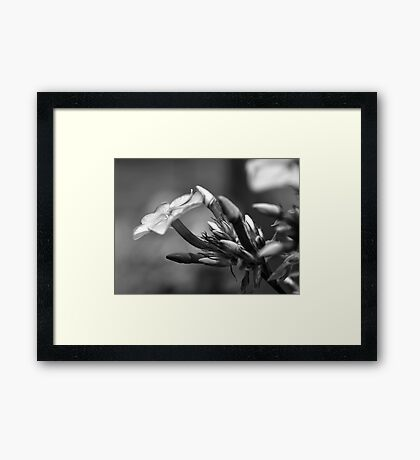 Pink Flowers in Black and White Framed Print