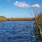 Sawgrass Water Sky and clouds by William  Boyer