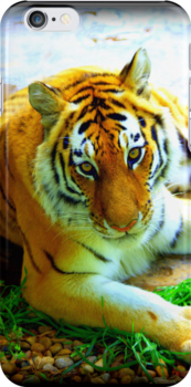 Exotic Tiger by klh0853