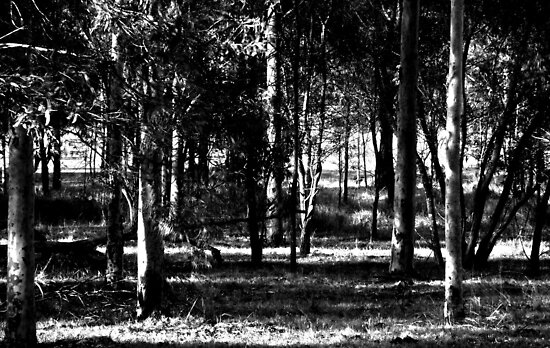 Afternoon Shadows in the Bush by Mark Batten-O'Donohoe