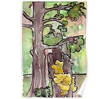 Trees with Yellow Fungus Poster