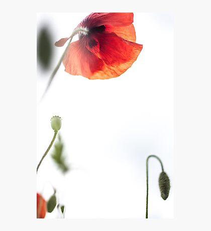 Opium Sky Photographic Print