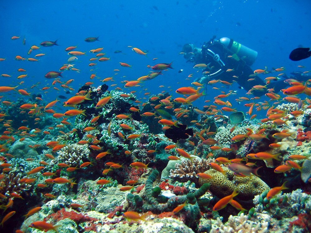 Diver cruising through a busy coral reef by simon17