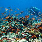 Diver cruising through a busy coral reef by simon17
