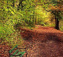 Bench by Pamsar