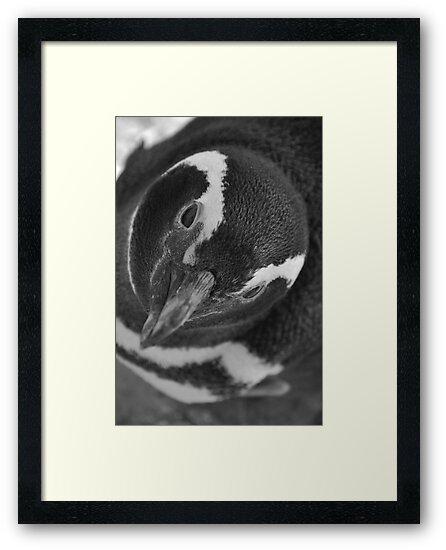 Penguin by DAJPowell