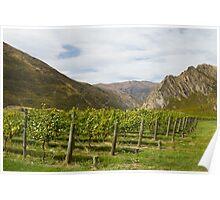New Zealand vineyards Poster