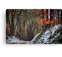 Winter Warmth Canvas Print