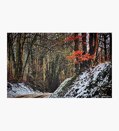 Winter Warmth Photographic Print
