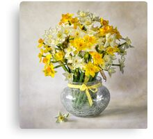 Spring Narcissus Canvas Print