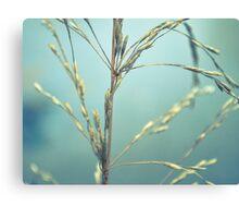 Plant close up Canvas Print