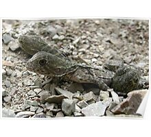 Baby Water Dragons Emerging Poster