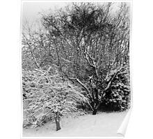 Winter magnolia... Poster