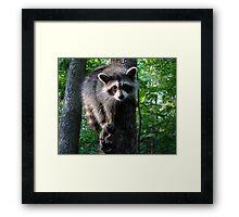 I ♥ Tree Climbing Framed Print