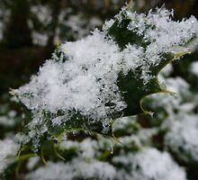 Snowy Holly Leaf by mstarmatt