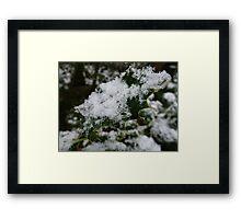 Snowy Holly Leaf Framed Print