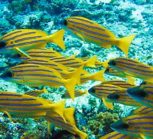 Reef fish  by simon17