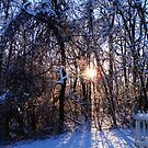 Snowy Gate by tanya breese