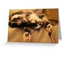 I Surrender Now Get That Tail OFF Me! Greeting Card