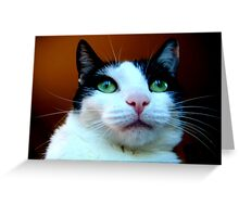 Catitude with Bratitude  Greeting Card