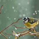 snowstorm survivor by Steve Shand