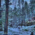 Snowy Pines At Dusk by Diana Graves Photography