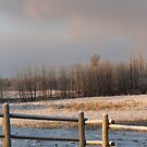 Icy Fence by Kathi Arnell