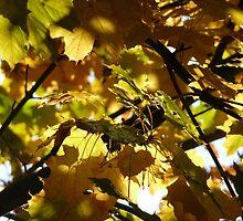 in between an autumn tree~ by Brandi Burdick