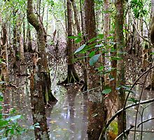 Mangrove Swamp at Cape Tribulation by styles