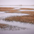 Marsh Gray's Beach Barnstable Cape Cod by Elizabeth Thomas