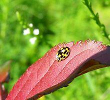 Ladybug on Leaf by Heartdra