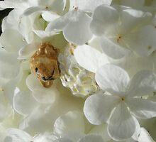 Sheep in a Flower by Heartdra