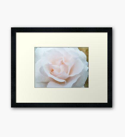 A Tinted Rose  Framed Print