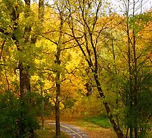 A road in the Woods by Jocelyne Choquette