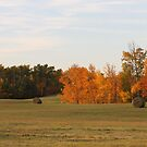Autumn Hay by Kathi Arnell