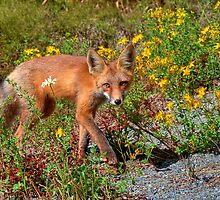 Friendly Fox by JamesA1