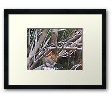 It's a cold cold world Framed Print