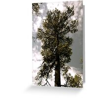 Old Trees Love to Touch the Sky Greeting Card