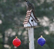 On the Feeders by Kathi Huff