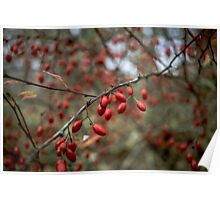 red nature lights Poster