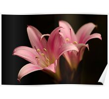 lilies hiding in my front garden Poster