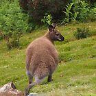 Wallaby. by Esther's Art and Photography