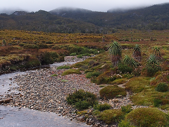 Cradle Moutain Tasmania.  by Esther's Art and Photography