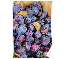 Angelina Plums Poster