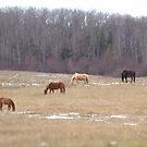 Meadow Grazing by Kathi Arnell