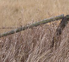 Old Fence by Kathi Arnell