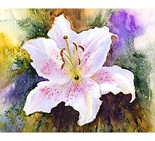 "Lily ""Muscadet"" (Lilium Orientalis Muscadet) Photographic Print"