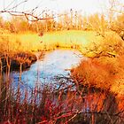 Town Brook, Sandwich, Massachusetts, Cape Cod by Elizabeth Thomas