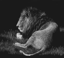Old King - lion by Heather Ward