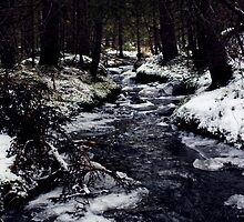 Forest Stream by Lina Ottosson